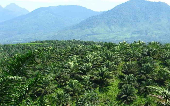 Pelepasan kawasan hutan bukan keputusan satu pihak