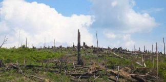 Lahan untuk sawit, dari hutan yang terdegradasi.