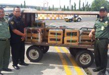 Balai Konservasi Sumberdaya Alam ( BKSDA) Jakarta, Sabtu kemarin, berhasil menggagalkan pengiriman sebanyak 353 ekor burung Nuri tujuan Kualanamu, Sumatera Utara.