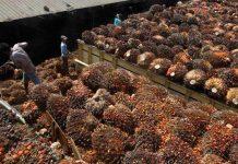 ITPC Lyon meluncurkan kampanye poster untuk meningkatkan kesadaran konsumen tentang kemajuan minyak kelapa sawit berkelanjutan di Indonesia. Foto : Elsam.com