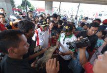 Buaya muara kemudian diserahkan kepada BKSDA DKI Jakarta.