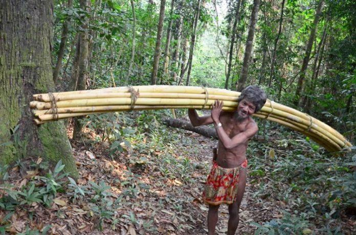 Sudah ada sekitar 1,6 juta hektare hutan adat yang terpetakan secara partisipatif di daerah yang telah memiliki Perda Pengakuan Masyarakat Adat. Foto : Jambi Link