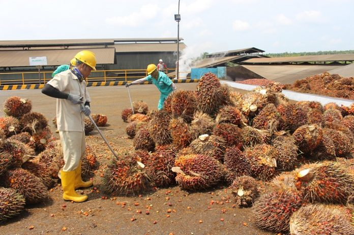 Pemerintah harus menyadari bahwa pengurangan angka kemiskinan melalui pengembangan industri kelapa sawit merupakan strategi pembangunan yang sangat penting. Foto : Jos/tropis.co