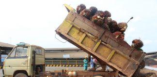 Pabrik sawit tersebut nantinya akan dibangun di daerah sentra perkebunan sawit di Kabupaten Bangka, Bangka Tengah, Bangka Barat, Bangka Selatan, Belitung dan Belitung Timur guna memudahkan petani menjual hasil perkebunannya. Foto : Jos/tropis.co