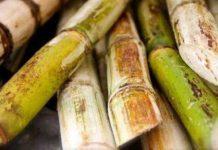 PTPN X meningatkan kapasitas Pabrik Gula (PG) Gempolkrep dan investasi untuk pengembangan produk turunan bioetanol di Mojokerto. Foto : Bangsa Online