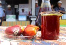 Harga CPO terpuruk seiring melimpahnya stok minya nabati di pasar global. Foto : Jos/tropis.co