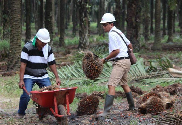 Gapki dan Japbusi siap bekerja sama untuk meningkatkan kesejahteraan ketenagakerjaan di industri kelapa sawit. Foto : Wisesa/tropis.co