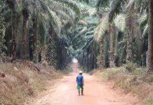 Kampanye hitam terhadap industri kelapa sawit Indonesia harus cepat ditangani agar dampaknya tidak meluas terhadap neraca perdagangan dan investasi luar negeri. Foto : Jos/tropis.co