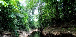 Indonesia memiliki lahan gambut seluas 24,7 juta hektare yang terdiri atas 12,4 juta hektare di fungsi lindung dan 12,3 juta hektare di fungsi budi daya. Foto : Hijau Daun