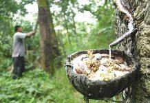 Karet merupakan hasil hutan yang bisa dipasarkan secara online dengan Indonesia Timber Exchange (ITE) System E-Commerce. Foto : Media Indonesia