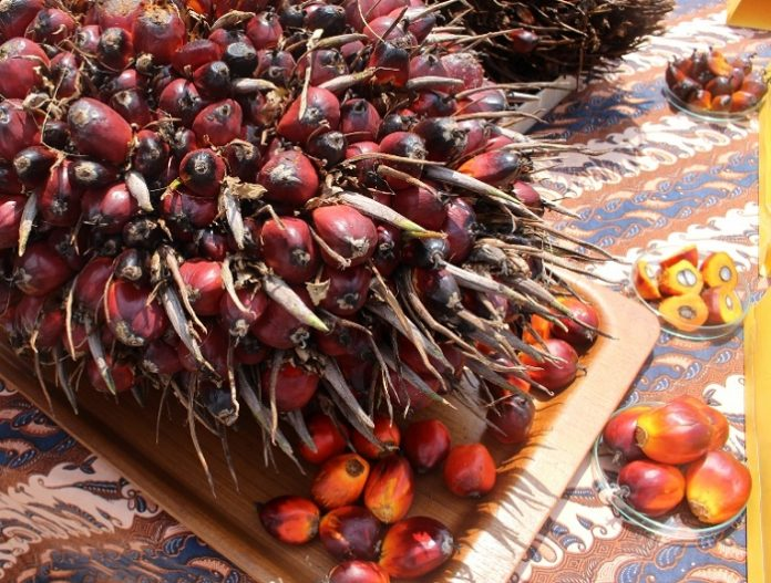 Pers Indonesia dapat bekerja sama membantu menjaga nama baik industri kelapa sawit Indonesia. Foto : Jos/tropis.co