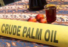 Industri pengolahan CPO menjadi produk minyak goreng ini berproduksi maka akan memberikan dampak yang positif terhadap harga buah tandan segar kelapa sawit petani. Foto : Jos/tropis.co