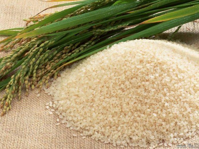 Produk pertanian di Garut salah satunya yang sedang dikembangkan oleh petani Garut yakni beras organik. Foto : Info Agribisnis