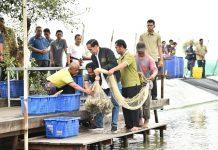 Presiden Joko Widodo melakukan Panen Raya Udang Vaname di Lokasi IPHPS Muara Gembong dikembangkan sebagai lokasi Silvofishery dengan model tambak dan konservasi mangrove. Foto : KLHK