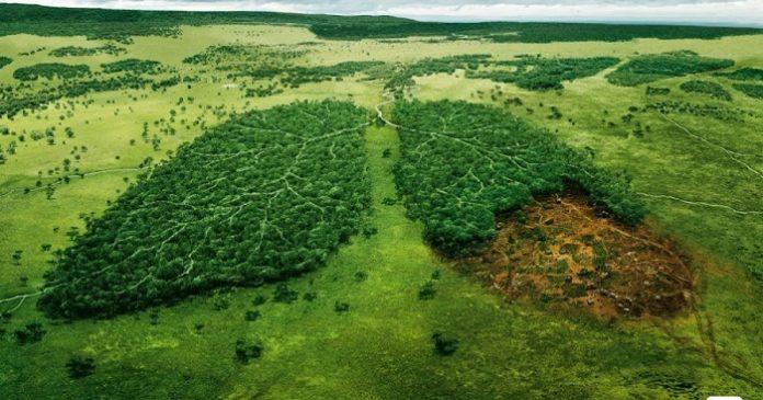 Pemantauan hutan yang dilakukan oleh University of Maryland melalui Global Land Analysis and Discovery (GLAD) dan dirilis oleh Global Forest Watch juga mencatat bahwa telah terjadi penurunan kehilangan hutan (deforestasi) di Indonesia yang signifikan. Foto : Good News from Indonesia