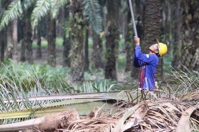 Pemberian HGU yang bermasalah, biasanya bersinggungan dengan hutan atau kawasan hutan. Foto : Wisesa/TROPIS.CO