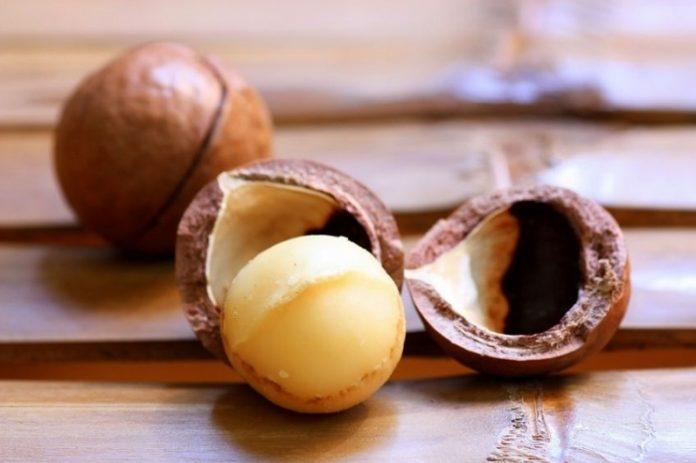 Kacang macadamia peluang ekspor yang menjanjikan devisa. Foto : www.inibaru.id
