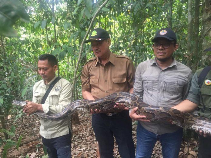 Kepala BKSD Jakarta Ahmad Munawir (pertama dari kanan) dan Kepala Balai TNGHS Awen Supranata (kedua dari kanan) secara simbolis melepasliarkan ular sanca ke habitatnya di kawasan TNGHS. Foto : KLHK