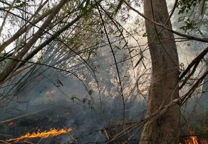 Karhutla disebabkan oleh manusia, 80 persen lahan terbakar berubah menjadi lahan perkebunan. Foto : zonautara.com