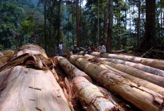 Sistem Verifikasi Legalitas Kayu (SVLK) diwajibkan bagi seluruh pelaku usaha di bidang kehutanan dan industri kayu di Indonesia dimaksudkan untuk memotret kepatuhan terhadap peraturan yang berlaku. Foto : Riau Hijau