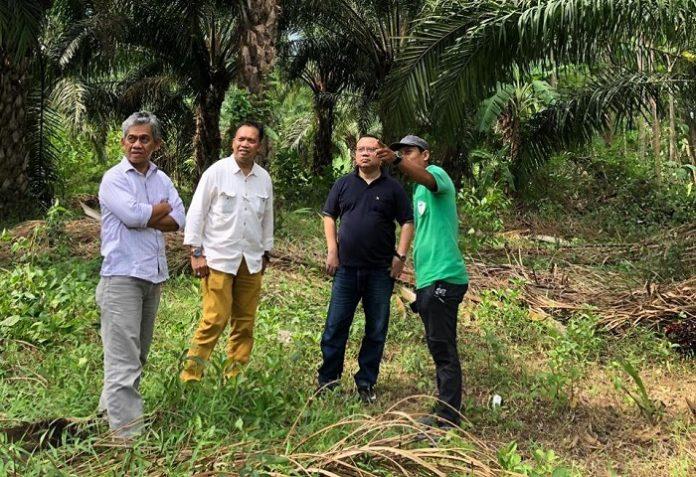 Direktur Eksekutif Gapki Mukti Sardjono, Ketua Umum Gapki Joko Supriyono, dan Ketua Bidang Komunikasi Gapki Tofan Mahdi (dari kiri ke kanan) meninjau perkebunan sawit di Blitar, Jawa Timur. Foto : Gapki