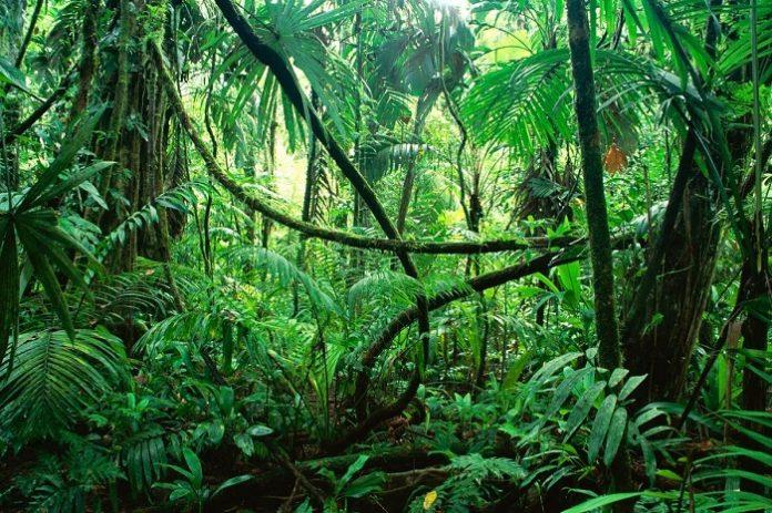 Pemberlakuan Omnibus Law Cipta Kerja Lingkungan Hidup dan Kehutanan harus tetap menjaga kelestarian hutan Indonesia. Foto: Super Adventure