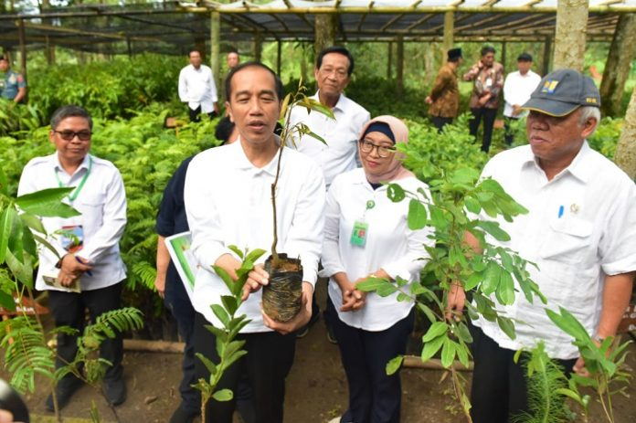 Presiden Joko Widodo meninjau tempat pembibitan di kawasan Taman Nasional Gunung Merapi, Jurang Jero, Kabupaten Magelang, Provinsi Jawa Tengah. Foto: Setkab