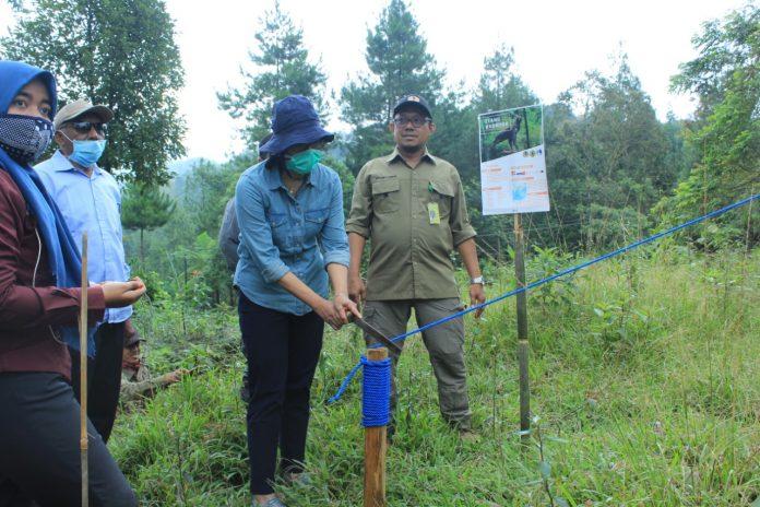 Direktur Konservati dan Hayati, Indra Eksplotasia saat melepas dua ekon elang di Taman Nasional Gunung Halimun Salak, akhir pekan kemarin. Foto: KLHK