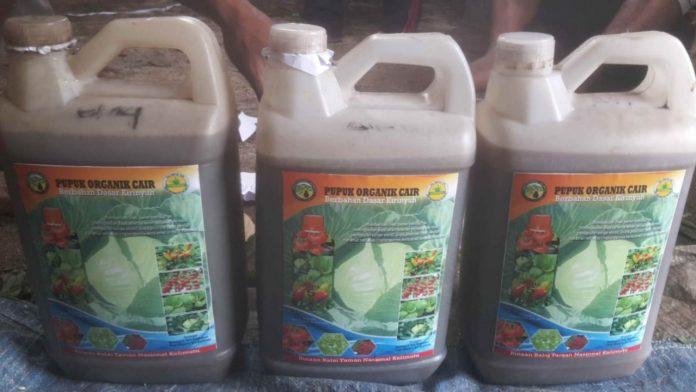 Pupuk cair organik produksi Balai TN Kelimutu yang kini telah dimanfaatka banyak petani di sekitar kawasan taman nasional, gulma cepat diberantas, prroduksi sayur mayur petani meningkat. Foto: Istimewa