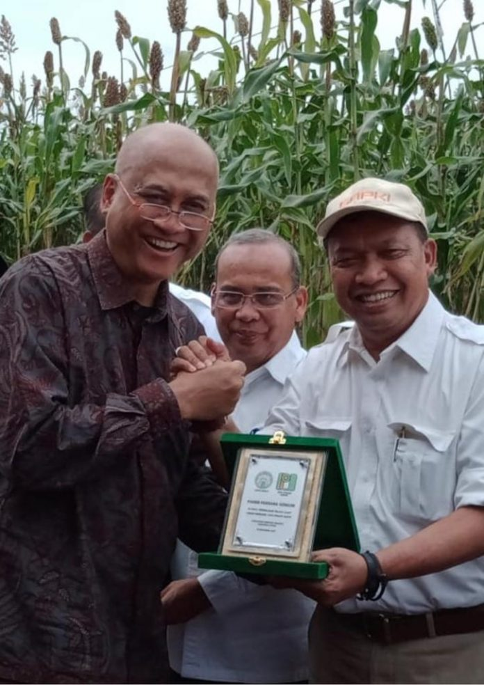 Ketua Umum Gapki, Joko Soepriyono bersama Kacuk Sumarto, pemilik perusahaan perkebunan kelapa sawit Paya Pinang, saat panen sorgum di areal replanting Paya Pinang di Serdang Bedagai, Sumatera Utara. Foto: Istimewa