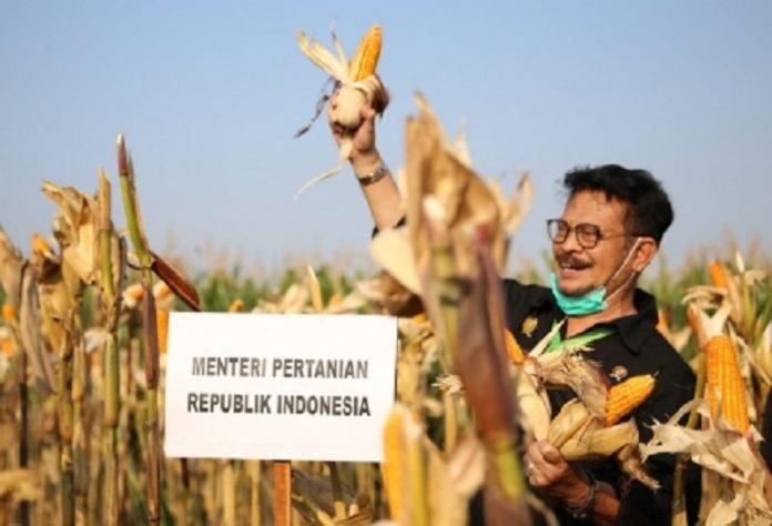 Menteri Pertanian Syahrul Yasin Limpo menilai potensi yang dimiliki di Indonesia membuat rakyat bisa survive, rakyat tetap bisa makan, rakyat tetap bisa menghasilkan dalam situasi dan tantangan apapun meski sulit juga dihadapi karena alamnya baik. Foto: Kementan