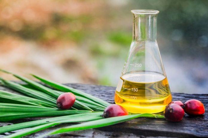 Dari semua minyak nabati, minyak sawit bersertifikasi berkelanjutan memimpin cara perlindungan lingkungan dan keanekaragaman hayati. Indonesia dan Malaysia, produsen terbesar dunia, telah mewajibkan sertifikasi tersebut. Foto: Asian Agri