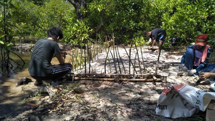 Keterlibatan masyarakat begitu penting dalam keberhasilan program padat karya mangrove ini karena masyarakat khususnya di pesisir pantai sangat memahami habitat mangrove yang selama ini dijadikan pendapatan dan penghidupan mereka. Foto: KLHK