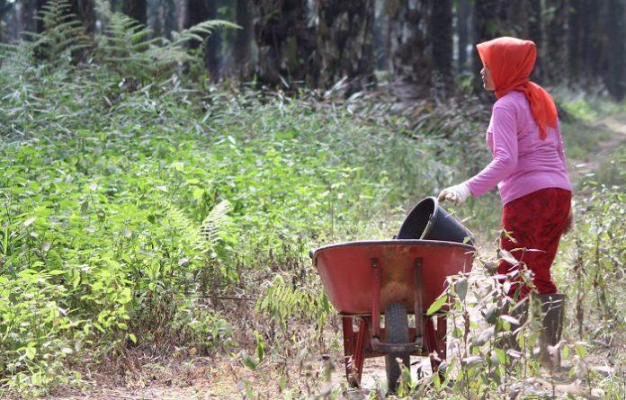 Isu eksploitasi pekerja perempuan merupakan kampanye hitam dan sebuah tuduhan yang tidak didasari fakta-fakta objektif terhadap industri sawit Indonesia. Foto: TROPIS.CO/Jos