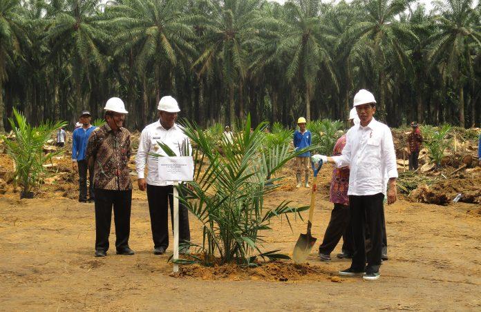 Presider Joko Widodo (paling kanan) sangat memperhatikan perkembangan perkebunan sawit rakyat, termasuk yang ada di dalam kawasan hutan. Foto: KLHK