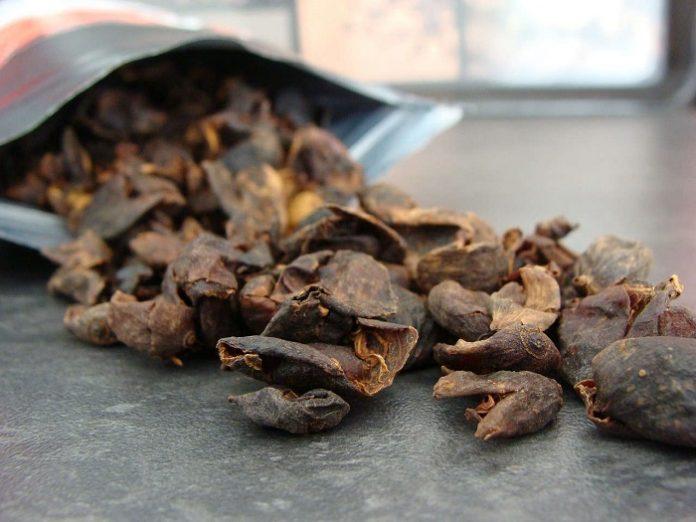 Limbah kulit kopi bisa dijadikan bubur sebagai pupuk untuk mempercepat pemulihan hutan tropis. Foto: Pak Tani Digital
