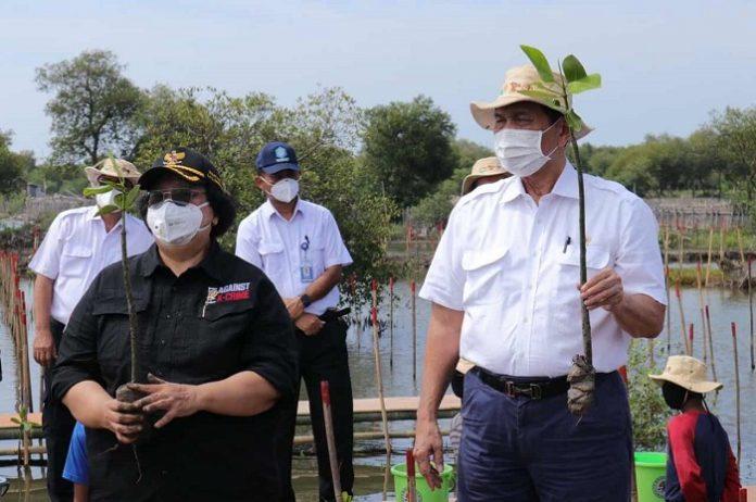 Menteri Lingkungan Hidup dan Kehutanan Siti Nurbaya (kiri) mendampingi Menteri Koordinator Bidang Kemaritiman dan Investasi Luhut Binsar Pandjaitan secara simbolis menanam bibit mangrove dalam acara Penanaman Mangrove Nasional. Foto: Kemenko Marves