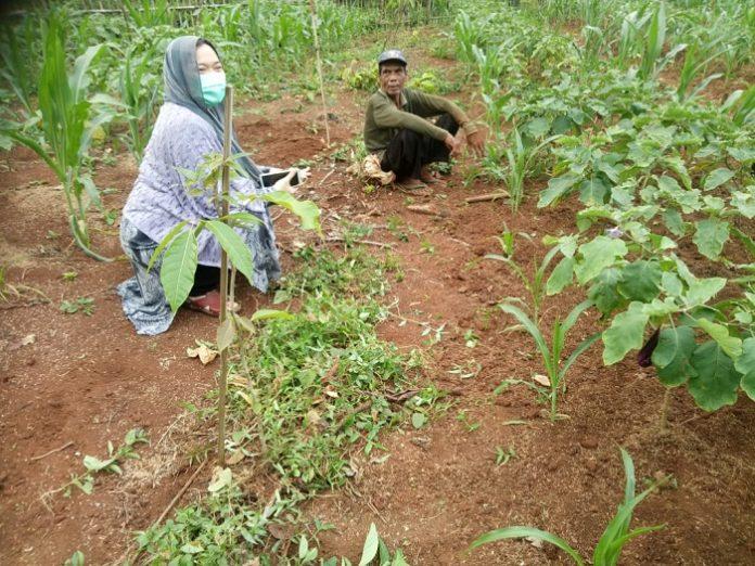 Penulis (kiri) bersama salah seorang petani yang menjalankan program agroforestri yang bermanfaat untuk peningkatan kesejahteraan ekonomi sekaligus menjaga hutan supaya selalu lestari di Rumpin, Bogor. Foto: Istimewa