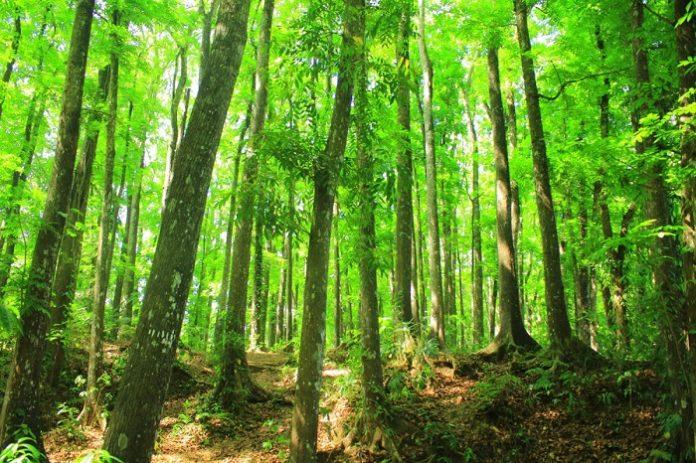 Sekitar 59 persen daratan di Indonesia merupakan hutan tropis yang merupakan 10 persen total luas hutan di dunia, sekitar 126 juta hektare hutan. Foto: Good News From Indonesia