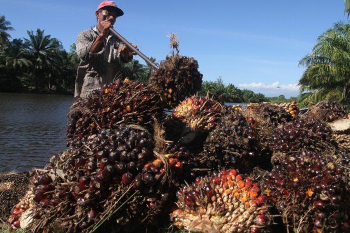 Indonesia sebagai produsen minyak sawit terbesar di dunia mengajukan gugatan atas Uni Eropa yang dianggap mendiskreditkan komoditas sawit ke World Trade Organization (WTO). Foto: Bareksa