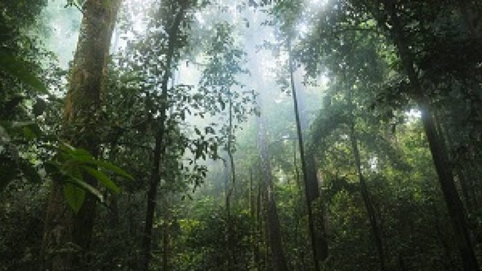 Kegiatan adaptasi dan mitigasi dalam perubahan iklim menjadi faktor penting dalam upaya pencapaian target Nationally Determined Contribution (NDC) Indonesia. Foto: IlmuGeografi.com