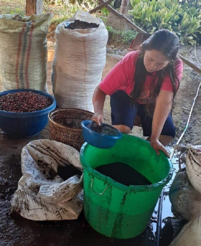 Perempuan petani kopi sedang menyaring kopi di sentra kopi Pagar Alam, Provinsi Sumatera Selatan. Foto: Project Empower