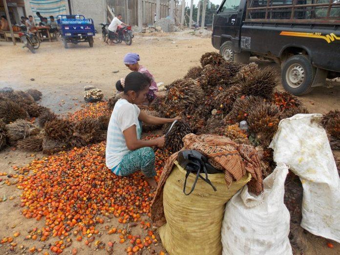 Perlu langkah revolusioner pemerintah untuk mengatasi masalah kemitraan, pendataan dan pendampingan terhadap petani sawit harus dilakukan. Foto: Anak Desa