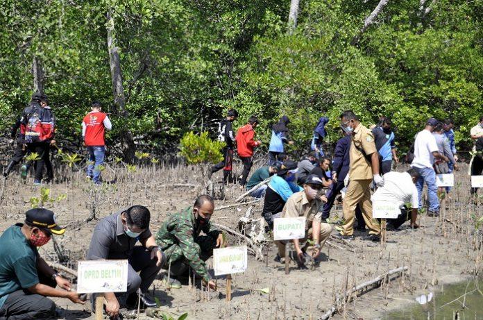 Pemerintah melalui BRGM berencana merehabilitasi sedikitnya 33 ribu hektare dari sekitar 600 ribu hektare kawasan mangrove yang terabrasi dan rusak. Foto: Pemkab Belitung Timur