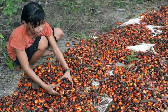 Wilmar dan BSR mendefinisikan solusi yang praktis dan berkelanjutan merupakan langkah signifikan untuk menghapus pekerja anak dari industri kelapa sawit, sambil memastikan bahwa hak-hak anak terus dilindungi. Foto: South China Morning Post
